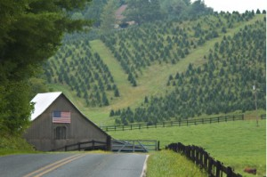 Farming Accounting - Asheville CPA